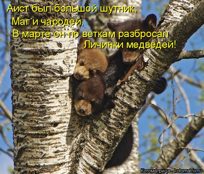 Котоматрица: Аист был большой шутник, Маг и чародей, В марте он по веткам разбросал Личинки медведей!