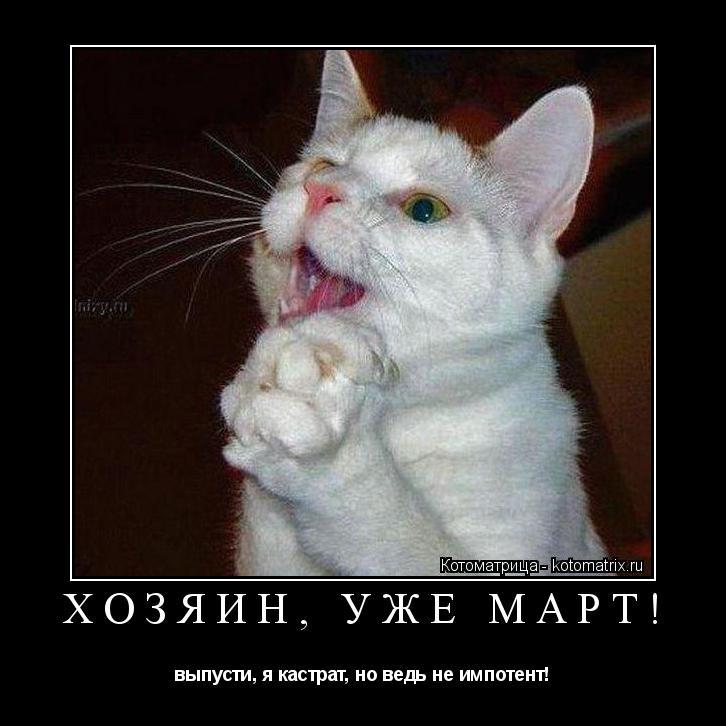Котоматрица: ХОЗЯИН, УЖЕ МАРТ! выпусти, я кастрат, но ведь не импотент!