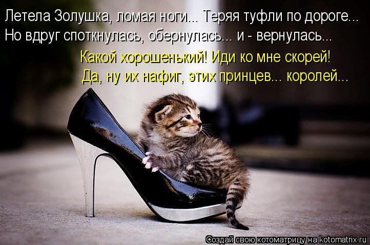 Котоматрица: Летела Золушка, ломая ноги... Теряя туфли по дороге... Но вдруг споткнулась, обернулась... и - вернулась...  Какой хорошенький! Иди ко мне скорей!