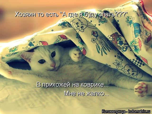 """Котоматрица: Хозяин то есть """"А где я буду спать???"""" В прихожей на коврике... Мне не жалко..."""