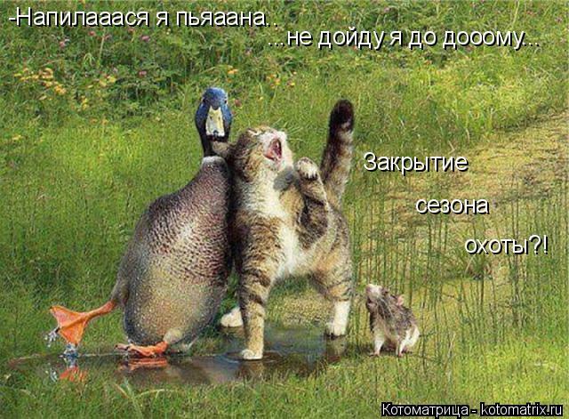 Котоматрица: -Напилааася я пьяаана.. ...не дойду я до дооому...  Закрытие  сезона охоты?!