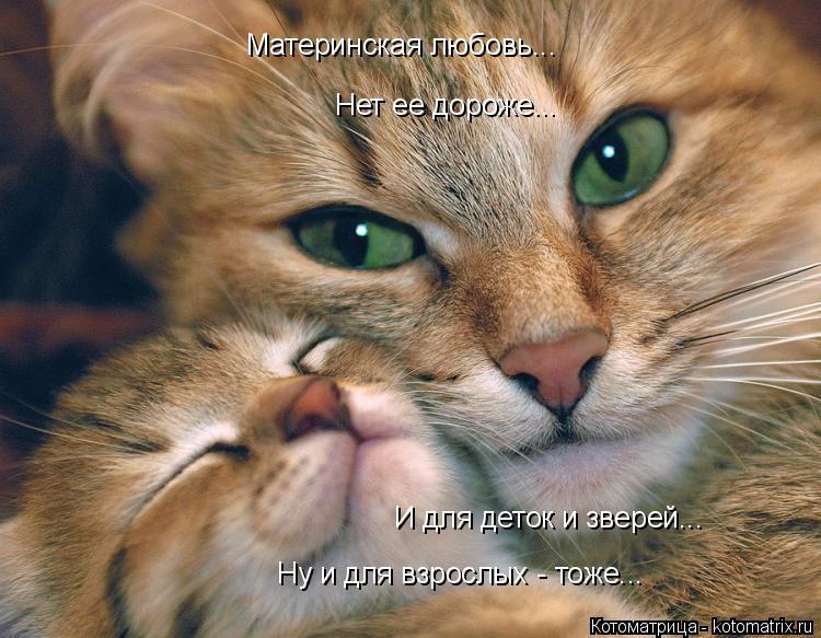 Котоматрица: Материнская любовь... Нет ее дороже... И для деток и зверей... Ну и для взрослых - тоже...