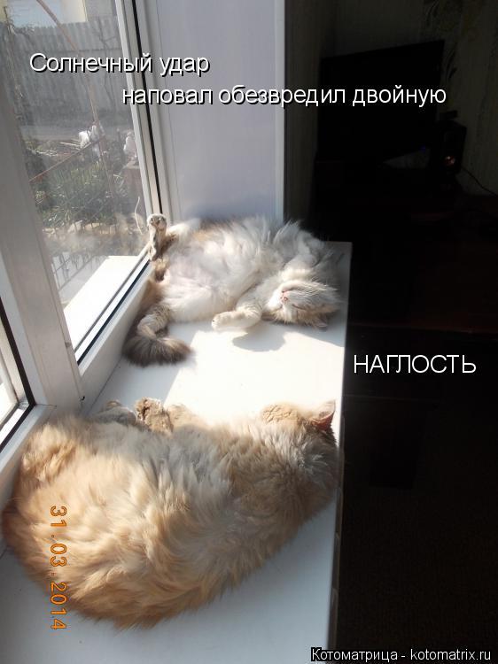 Котоматрица: Солнечный удар наповал обезвредил двойную НАГЛОСТЬ