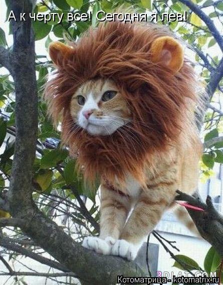 Котоматрица: А к черту все! Сегодня я лев!