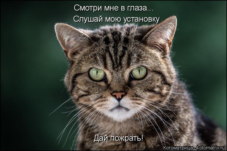 Котоматрица: Смотри мне в глаза... Слушай мою установку Дай пожрать!