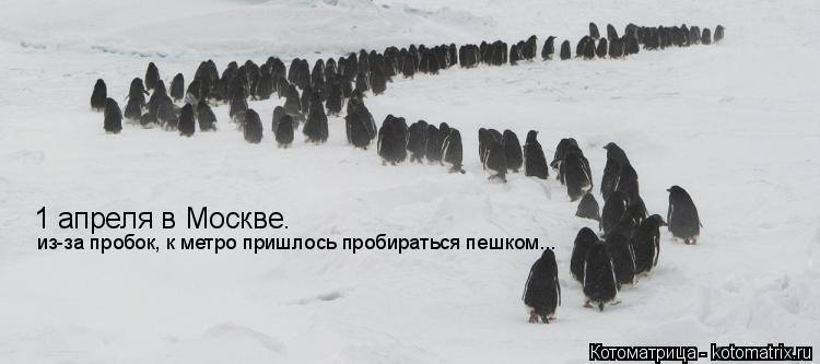 Котоматрица: 1 апреля в Москве. из-за пробок, к метро пришлось пробираться пешком...