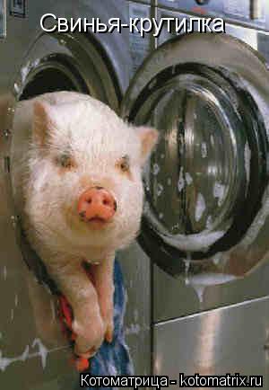 Котоматрица: Свинья-крутилка