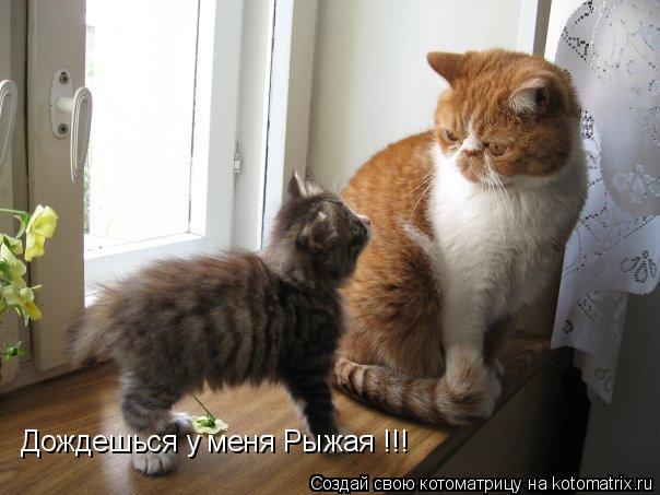 Котоматрица: Дождешься у меня Рыжая !!!