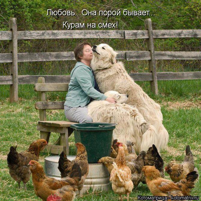 Котоматрица: Любовь...Она порой бывает... Курам на смех!