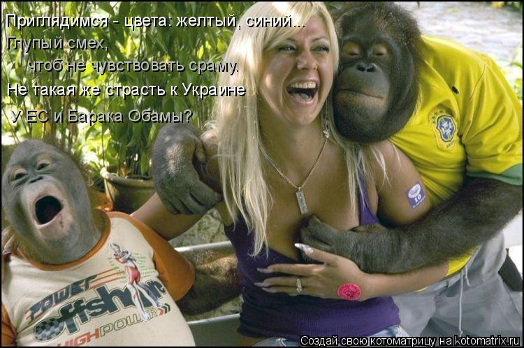 Котоматрица: Приглядимся - цвета: желтый, синий... Глупый смех,  чтоб не чувствовать сраму. Не такая же страсть к Украине У ЕС и Барака Обамы?