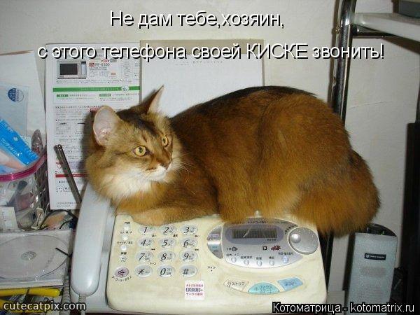 Котоматрица: Не дам тебе,хозяин, с этого телефона своей КИСКЕ звонить!