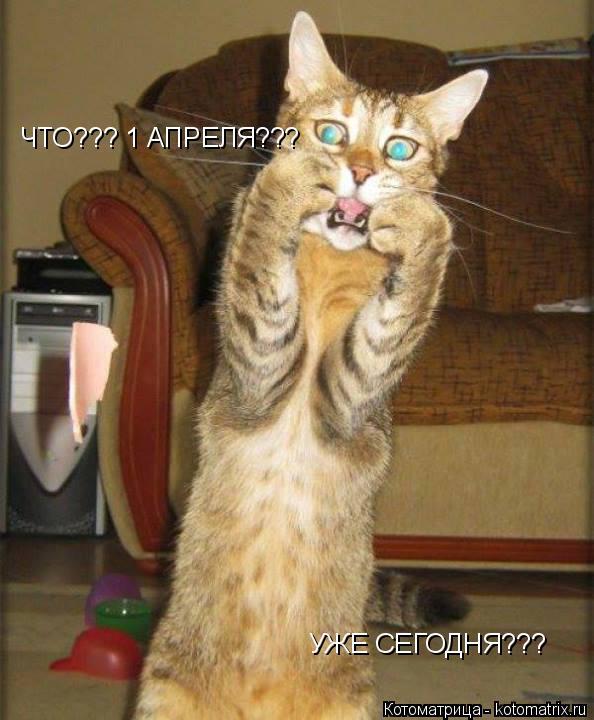 Котоматрица: ЧТО??? 1 АПРЕЛЯ??? УЖЕ СЕГОДНЯ???
