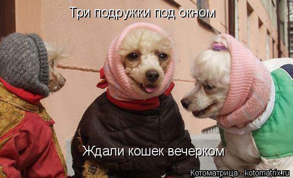 Котоматрица: Три подружки под окном Ждали кошек вечерком