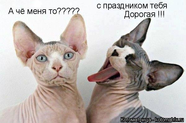 Котоматрица: с праздником тебя  Дорогая !!! А чё меня то?????