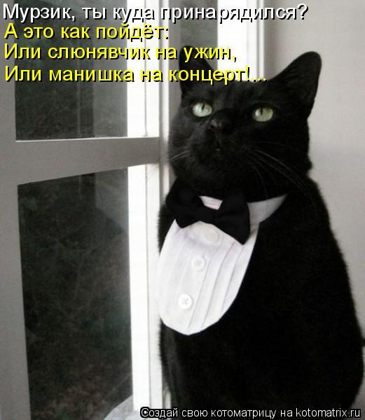 Котоматрица: Мурзик, ты куда принарядился? А это как пойдёт: Или слюнявчик на ужин, Или манишка на концерт!...