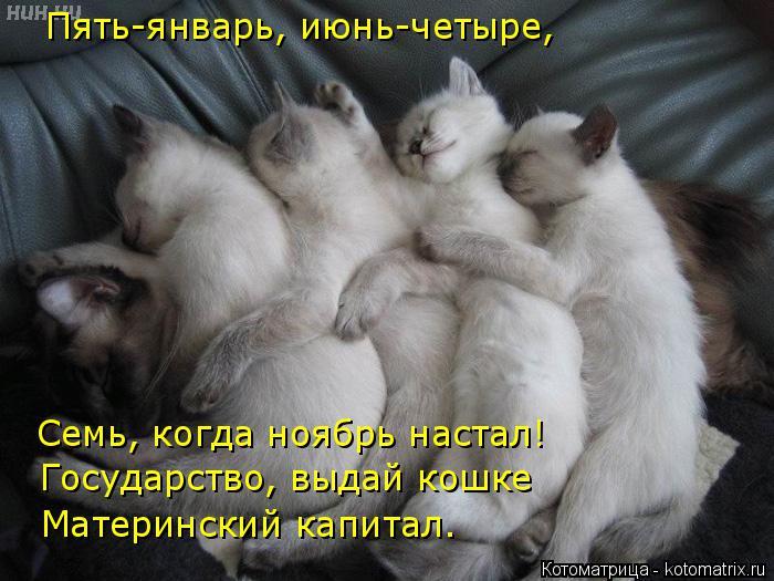 Котоматрица: Пять-январь, июнь-четыре, Семь, когда ноябрь настал! Государство, выдай кошке  Материнский капитал.