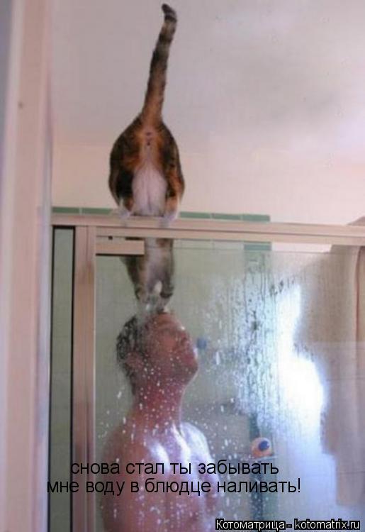 Котоматрица: снова стал ты забывать мне воду в блюдце наливать!