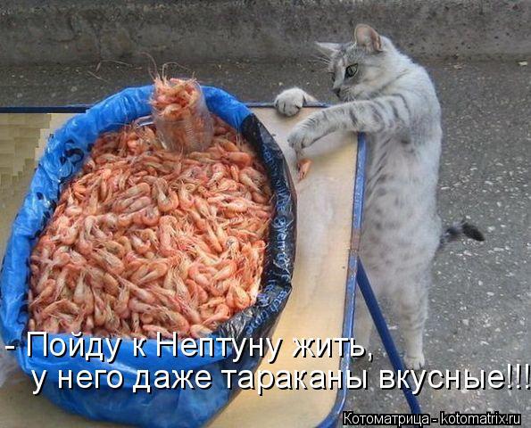 Котоматрица: - Пойду к Нептуну жить,  у него даже тараканы вкусные!!!