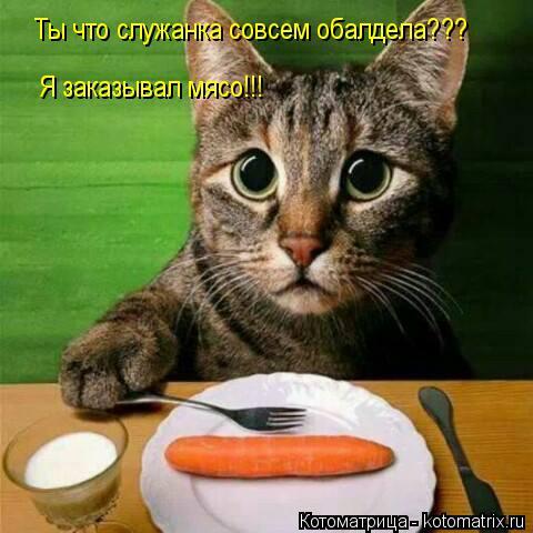 http://kotomatrix.ru/images/lolz/2014/04/02/kotomatritsa_cy.jpg