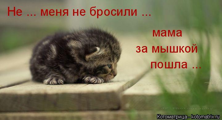 Котоматрица: Не ... меня не бросили ... мама пошла ... за мышкой