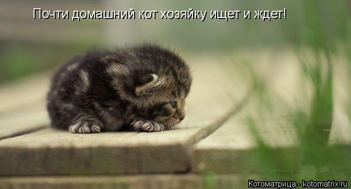 Котоматрица: Почти домашний кот хозяйку ищет и ждет!