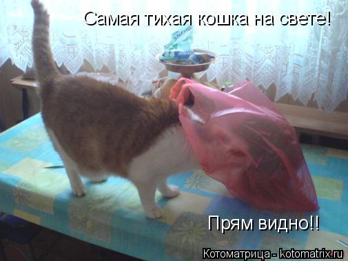 http://kotomatrix.ru/images/lolz/2014/04/02/kotomatritsa_qv.jpg