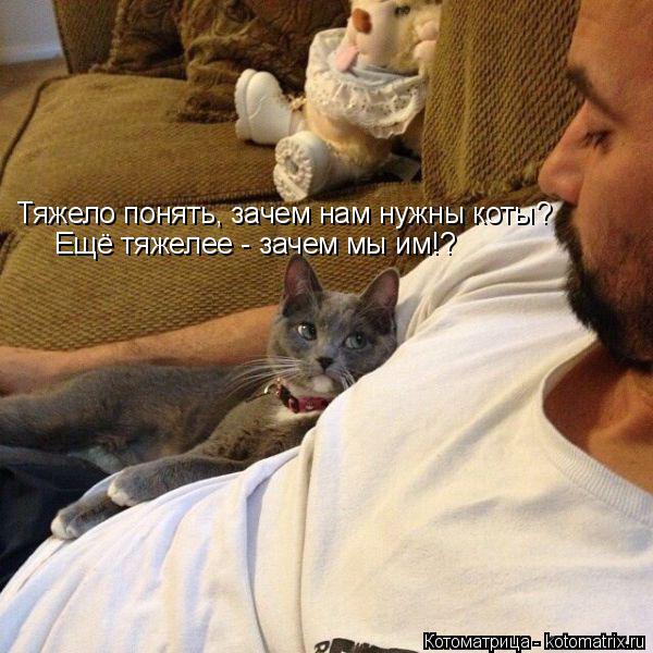 Котоматрица: Ещё тяжелее - зачем мы им!? Тяжело понять, зачем нам нужны коты?