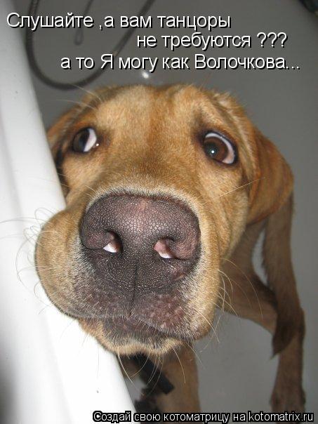 Котоматрица: Слушайте ,а вам танцоры  не требуются ??? а то Я могу как Волочкова...
