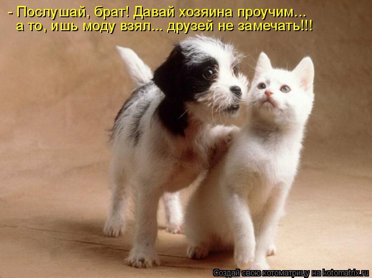Котоматрица: - Послушай, брат! Давай хозяина проучим... а то, ишь моду взял... друзей не замечать!!!