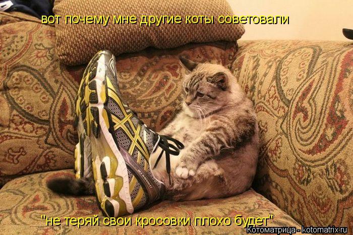 """Котоматрица: вот почему мне другие коты советовали """"не теряй свои кросовки плохо будет"""""""