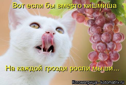 Котоматрица: Вот если бы вместо кишмиша На каждой грозди росли мыши...