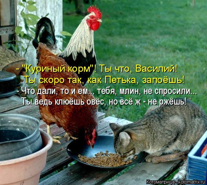 """Котоматрица: - """"Куриный корм""""! Ты что, Василий! Ты скоро так, как Петька, запоёшь! - Что дали, то и ем... тебя, млин, не спросили... Ты ведь клюёшь овёс, но всё ж - н"""