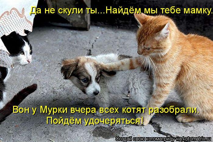 Котоматрица: Да не скули ты...Найдём мы тебе мамку. Вон у Мурки вчера всех котят разобрали. Пойдём удочеряться!