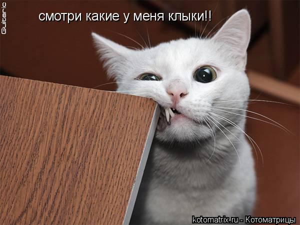 Котоматрица: смотри какие у меня клыки!!