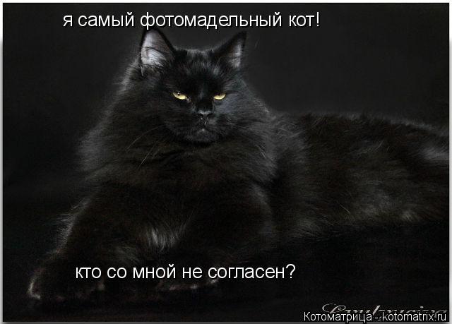 Котоматрица: я самый фотомадельный кот! кто со мной не согласен? кто со мной не согласен?