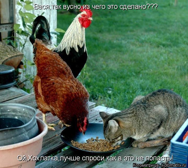 Котоматрица: Вася,так вусно,из чего это сделано??? Ой,Хохлатка,лучше спроси,как в это не попасть!