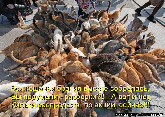 Котоматрица: Вся кошачья братия вместе собралась, Вы подумали - разборки?!... А вот и нет, Кильки распродажа, по акции, сейчас!!!