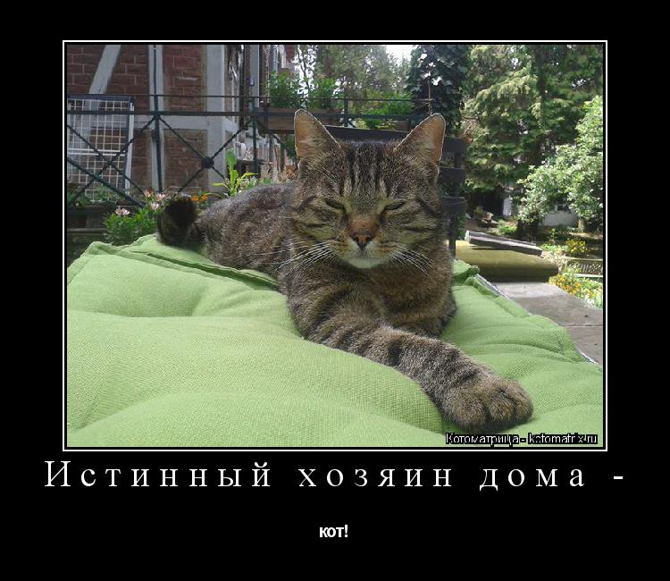 Котоматрица: Истинный хозяин дома - кот!