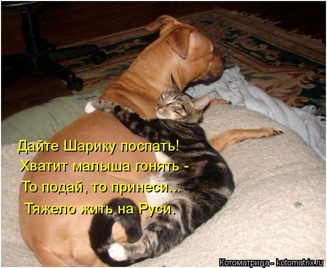 Котоматрица: Дайте Шарику поспать! Хватит малыша гонять - То подай, то принеси... Тяжело жить на Руси.