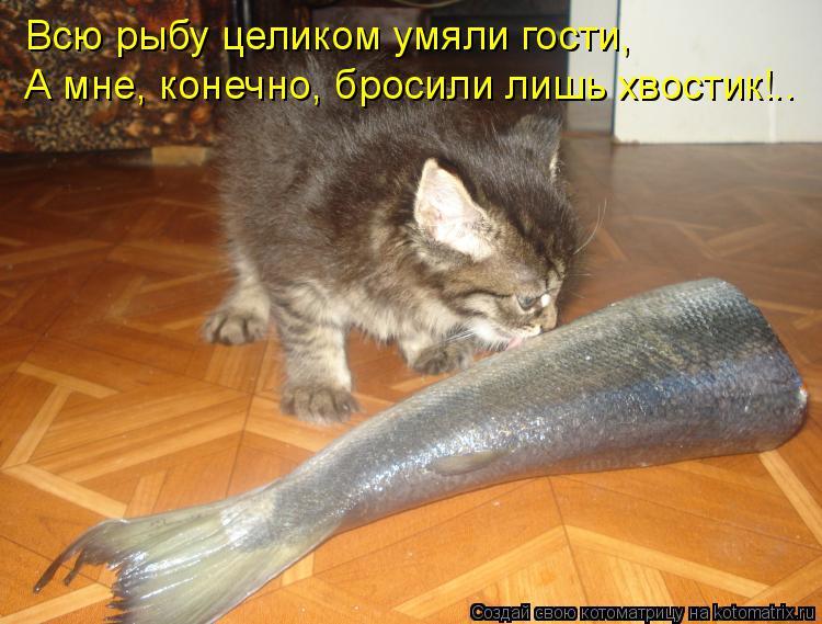 Котоматрица: Всю рыбу целиком умяли гости, А мне, конечно, бросили лишь хвостик!..