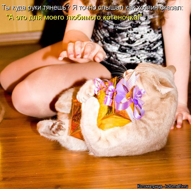 """Котоматрица: Ты куда руки тянешь? Я точно слышал как хозяин сказал: """"А это для моего любимого котеночка!"""""""