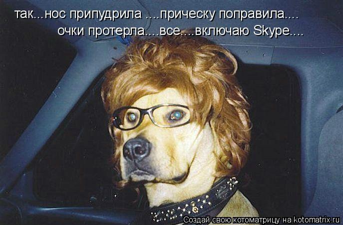 Котоматрица: так...нос припудрила ....прическу поправила.... очки протерла....все....включаю Skype....