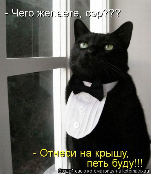 Котоматрица: - Чего желаете, сэр??? - Отнеси на крышу, петь буду!!!