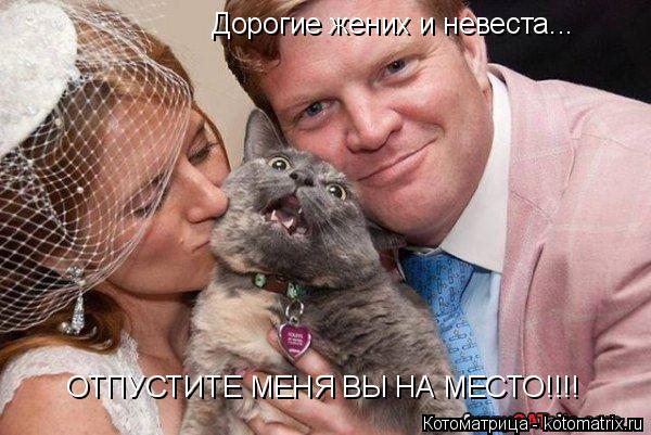 Котоматрица: Дорогие жених и невеста... ОТПУСТИТЕ МЕНЯ ВЫ НА МЕСТО!!!!