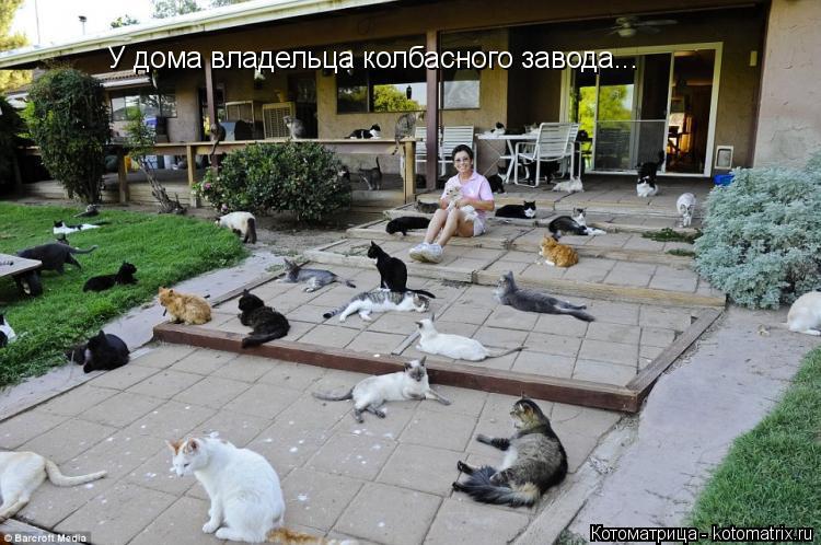 Дом для кота на улице фото