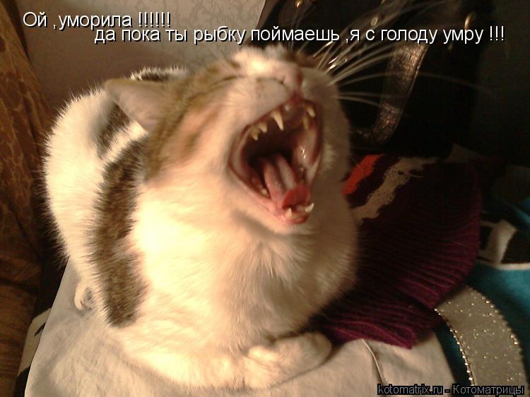 Котоматрица: Ой ,уморила !!!!!! да пока ты рыбку поймаешь ,я с голоду умру !!!