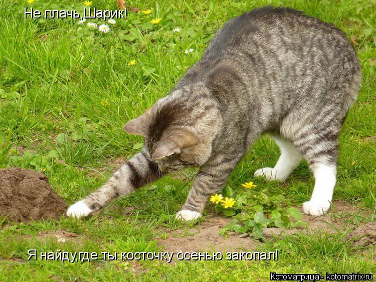 Котоматрица: Не плачь,Шарик! Я найду,где ты косточку осенью закопал!