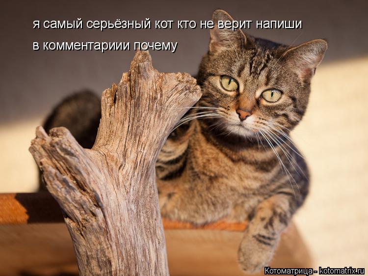 Котоматрица: я самый серьёзный кот кто не верит напиши в комментариии почему