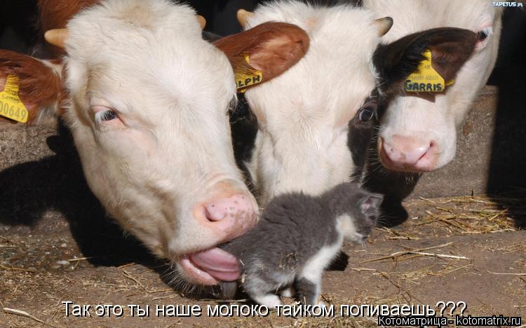 Котоматрица: Так это ты наше молоко тайком попиваешь???