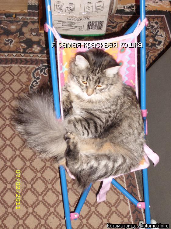 Котоматрица: я самая красивая кошка